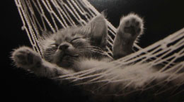 sleepkat